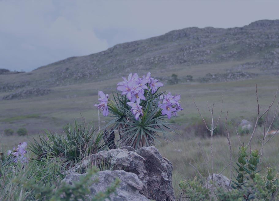 flora11