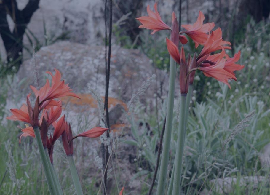 flora12